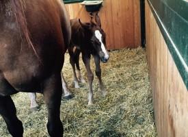 Quarter Dream 1st 2016 foal!!